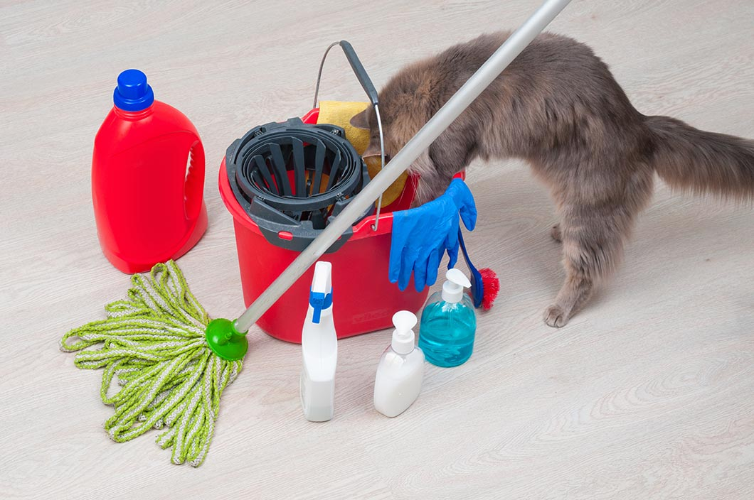 How to Prepare for a Home Cleaning